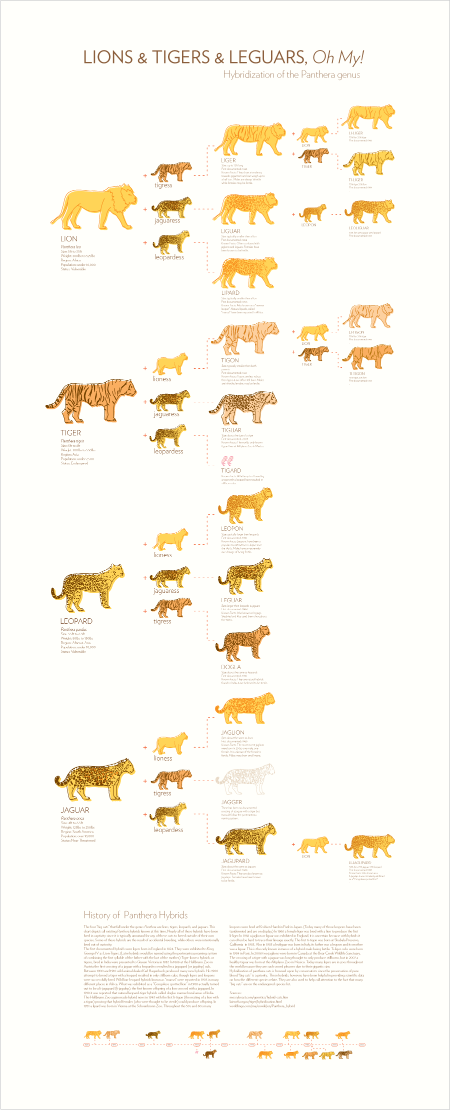 Lions amp Tigers amp Leguars Oh My amberlcox