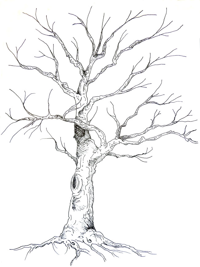 Tree Drawings In Pencil | Search Results | Calendar 2015
